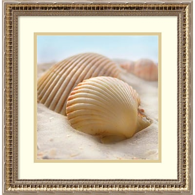 Amanti Art Framed Art Print Beachy Shell I by Donna Geissler 18 x 18H, Frame Gold (DSW3908943)