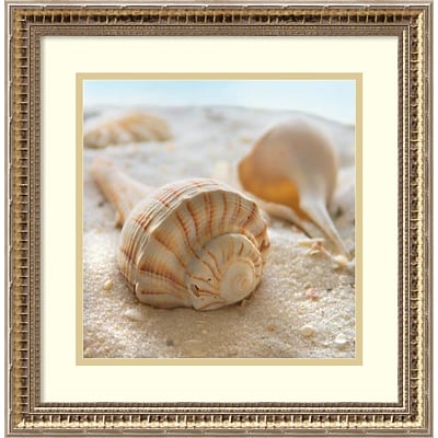 Amanti Art Framed Art Print Beachy Shell III by Donna Geissler 18 x 18H, Frame Gold (DSW3908946)