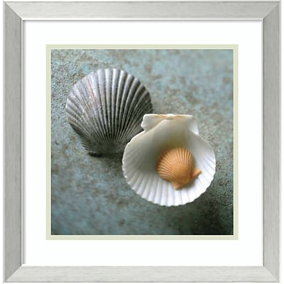 Amanti Art Framed Art Print Scallops by Glen & Gayle Wans 18 x 18H, Frame Brushed Steel (DSW3909006)