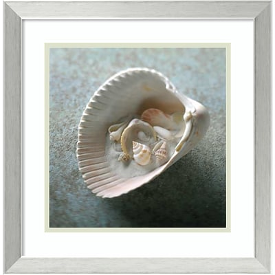 Amanti Art Framed Art Print Shells in Shell by Glen & Gayle Wans  18 x 18H, Frame Stainless Steel (DSW3909008)