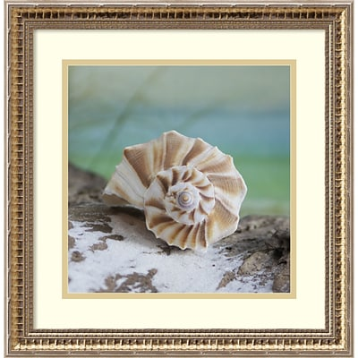 Amanti Art Framed Art Print Shell and Driftwood I by Donna Geissler 18 x 18H, Frame Gold (DSW3909013)