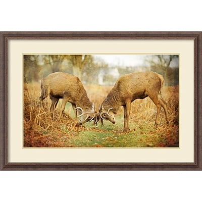 Amanti Art Framed Art Print Unyielding (Deer) by Joe Reynolds 39W x 27H Frame Rustic Wood (DSW3909373)