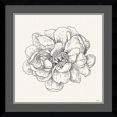 Amanti Art Framed Art Print Pen and Ink Florals IV by Danhui Nai 21W x 21H, Frame Satin Black (DSW3909581)