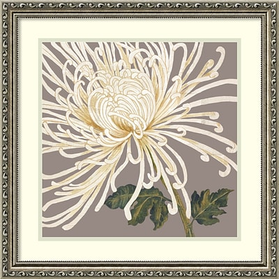 Amanti Art Framed Art Print Grande and Glorious (Floral) by Judy Shelby 23W x 23H, Frame Silver (DSW3910536)