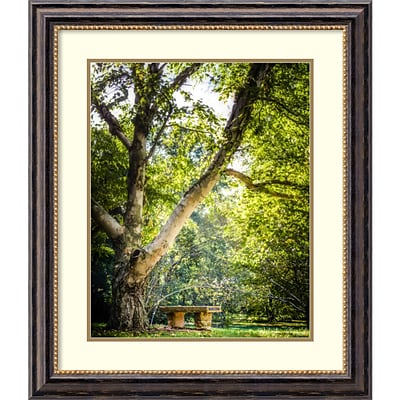 Amanti Art Framed Art Print A Place to Ponder Tree by Matt Marten 25 x 29H, Frame Black  (DSW3910578)