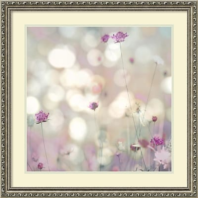 Amanti Art Framed Art Print Floral Meadow I (Floral) by Kate Carrigan 27W x 27H, Frame Silver (DSW3910583)