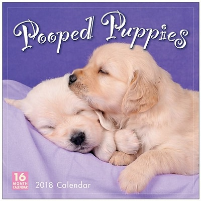 2018 Sellers Publishing, Inc. 12 x 12 Pooped Puppies Wall Calendar (CA0151)