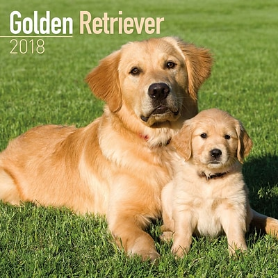 2018 Turner Photographic 12x12 Goden Retriever Wall Calendar (18998940022)
