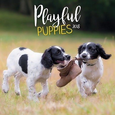 2018 Turner Photographic 12x12 Playful Puppies Wall Calendar (18998940045)