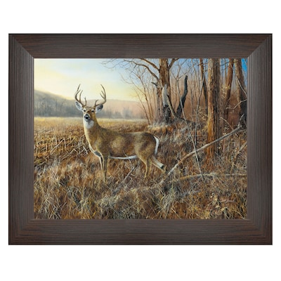 "Trendydecor4u 19 In. X 15 In. ""bluff Country Buck"" By Jim Hansen, Printed Framed Wall Art (jh152 636mb)"