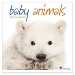 2019 TF Publishing 7 X 7 Baby Animals Mini Calendar (19-2000)