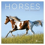 2019 TF Publishing 7 X 7 Horses Mini Calendar (19-2007)