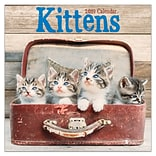 2019 TF Publishing 7 X 7 Kittens Mini Calendar (19-2009)