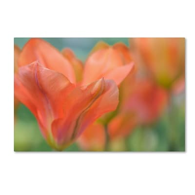Trademark Fine Art Cora Niele Orange Wings Tulips 12 x 19 Canvas Stretched (190836248506)