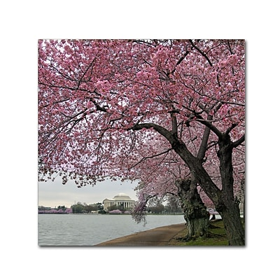 Trademark Fine Art CATeyes Tidal Basin Blossoms 18 x 18 Canvas Stretched (190836099313)