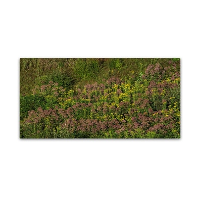 Trademark Fine Art Kurt Shaffer Ohio Meadow in Bloom 12 x 24 Canvas Stretched (190836007721)