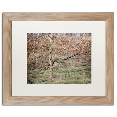 Trademark Fine Art Cora Niele Birch 16 x 20 Matted Framed (190836316199)