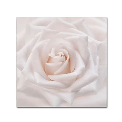 Trademark Fine Art Cora Niele Soft White Rose 14 x 14 Canvas Stretched (190836309665)