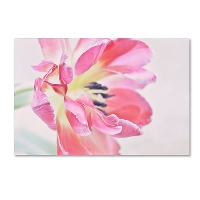 Trademark Fine Art Cora Niele Cerise Tulip 30 x 47 Canvas Stretched (190836257119)
