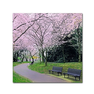 Trademark Fine Art CATeyes Spring Path 14 x 14 Canvas Stretched (190836099085)