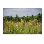 Trademark Fine Art Kurt Shaffer Goldenrod Fence 12 x 19 Canvas Stretched (190836006397)