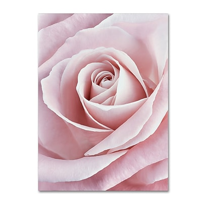 Trademark Fine Art Cora Niele Pink Rose 12 x 19 Canvas Stretched (190836308408)