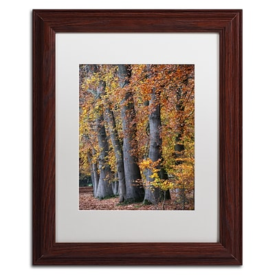 Trademark Fine Art Cora Niele Autumn Beeches II 11 x 14 Matted Framed (190836315642)