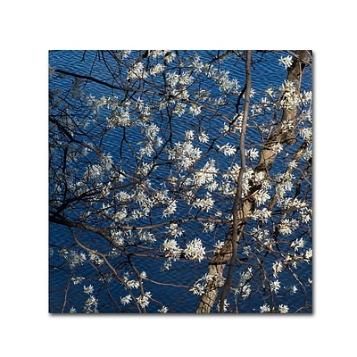 Trademark Fine Art Kurt Shaffer Springtime at the Lake 14 x 14 Canvas Stretched (886511962927)