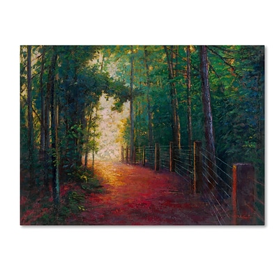 Trademark Fine Art Daniel Moises Misty Trail 14 x 19 Canvas Stretched (190836277865)