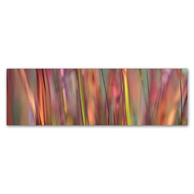 Trademark Fine Art Cora Niele Imperata Grass Scape 8 x 24 Canvas Stretched (190836317578)
