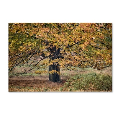 Trademark Fine Art Cora Niele Beech Tree 12 x 19 Canvas Stretched (190836315963)