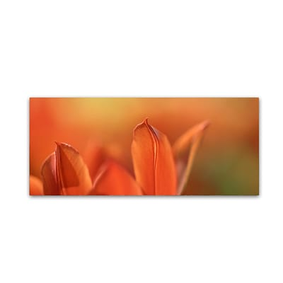 Trademark Fine Art Cora Niele Duc van Tol Orange Tulip 10 x 24 Canvas Stretched (190836317264)