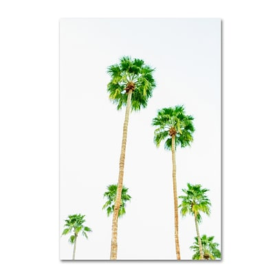 Trademark Fine Art Ariane Moshayedi Palms 6 12 x 19 Canvas Stretched (190836272549)