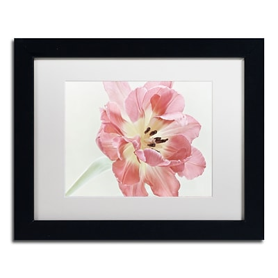 Trademark Fine Art Cora Niele Red Tulip 11 x 14 Matted Framed (190836308804)