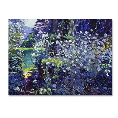 Trademark Fine Art David Lloyd Glover Tangled White Flowers 14 x 19 Canvas Stretched (190836225569)
