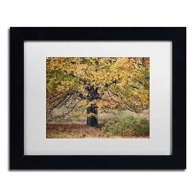 Trademark Fine Art Cora Niele Beech Tree 11 x 14 Matted Framed (190836315949)