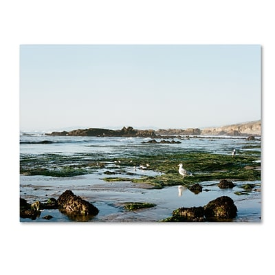 Trademark Fine Art Ariane Moshayedi Seagull Low Tide 14 x 19 Canvas Stretched (190836274505)