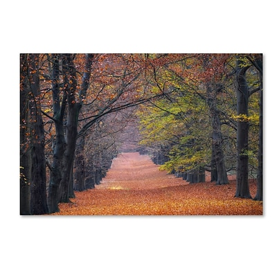 Trademark Fine Art Cora Niele Beech Lane 12 x 19 Canvas Stretched (190836315826)