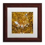Trademark Fine Art Kurt Shaffer Golden Canopy of Autumn 11 x 11 Matted Framed (886511964785)