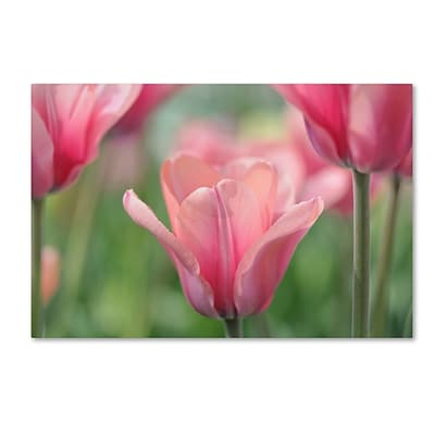 Trademark Fine Art Cora Niele Tulip Mirella 12 x 19 Canvas Stretched (190836249947)