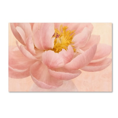 Trademark Fine Art Cora Niele Pink Peony 12 x 19 Canvas Stretched (190836259526)