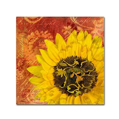 Trademark Fine Art Cora Niele Sunflower - Love of Light 14 x 14 Canvas Stretched (190836312603)