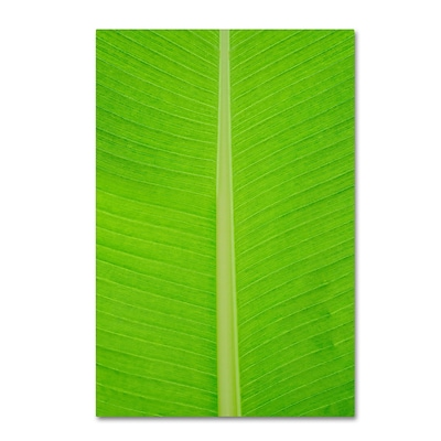 Trademark Fine Art Cora Niele Leaf Texture I 12 x 19 Canvas Stretched (190836314140)