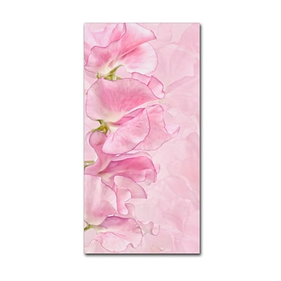 Trademark Fine Art Cora Niele Pink Sweet Peas 10 x 19 Canvas Stretched (190836317707)