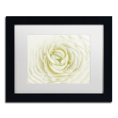 Trademark Fine Art Cora Niele White Persian Buttercup 11 x 14 Matted Framed (190836311187)