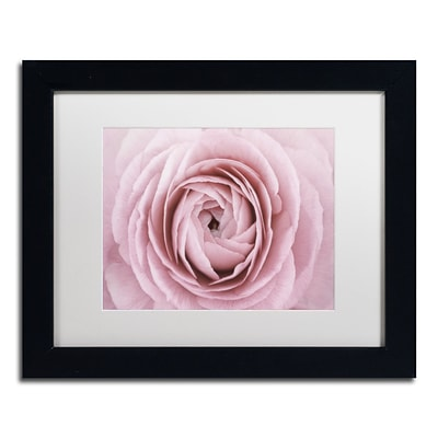 Trademark Fine Art Cora Niele Persian Buttercup 11 x 14 Matted Framed (190836306428)