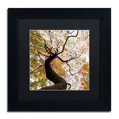 Trademark Fine Art Kurt Shaffer Under a Japanese Maple 2 11 x 11 Matted Framed (886511966383)