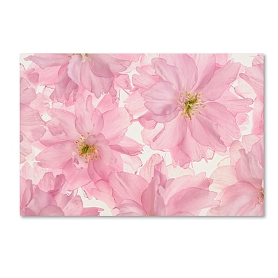 Trademark Fine Art Cora Niele Pink Cherry Blossom 12 x 19 Canvas Stretched (190836306725)