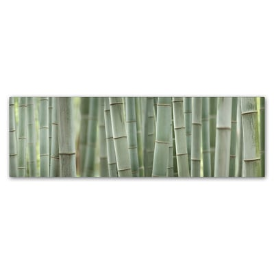 Trademark Fine Art Cora Niele Grey Bamboo Scape 8 x 24 Canvas Stretched (190836317493)