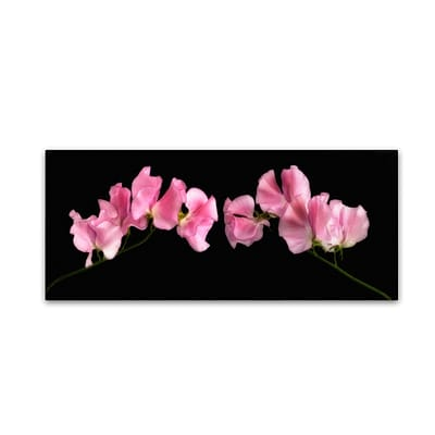 Trademark Fine Art Cora Niele Glowing Sweet Peas 10 x 24 Canvas Stretched (190836317301)